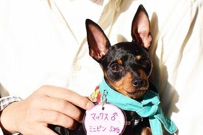 f:id:animal_protections:20141201163618j:image