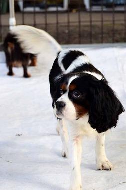 f:id:animal_protections:20141223122926j:image