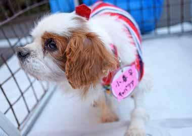 f:id:animal_protections:20150225142018j:image