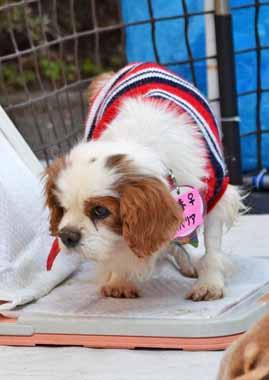 f:id:animal_protections:20150225142021j:image