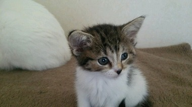 f:id:animal_protections:20150419011141j:image