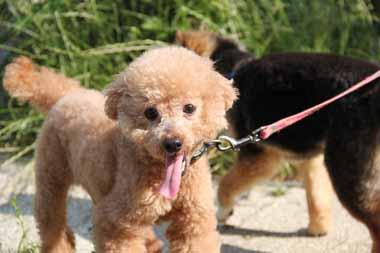 f:id:animal_protections:20150604171550j:image