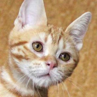f:id:animal_protections:20150611151446j:image