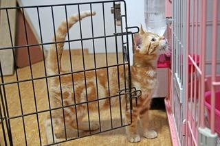 f:id:animal_protections:20150611151447j:image