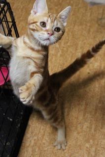 f:id:animal_protections:20150611151450j:image