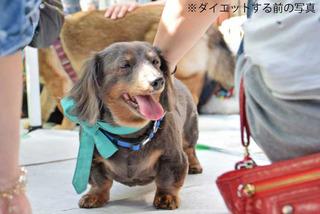 f:id:animal_protections:20150629164620j:image