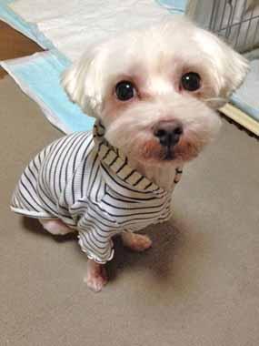 f:id:animal_protections:20151022224718j:image