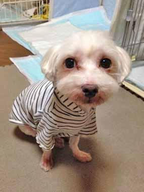 f:id:animal_protections:20151022224719j:image