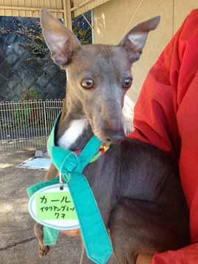 f:id:animal_protections:20151130133342j:image