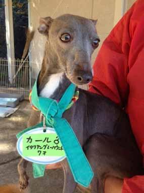 f:id:animal_protections:20151130133344j:image