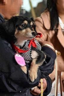 f:id:animal_protections:20151214140034j:image