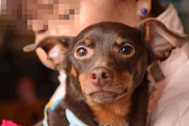 f:id:animal_protections:20151225003846j:image