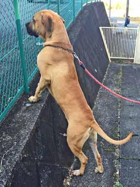 f:id:animal_protections:20160112123352j:image