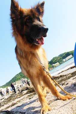 f:id:animal_protections:20160524230229j:image