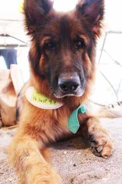f:id:animal_protections:20160524230230j:image