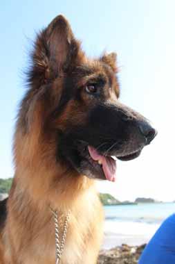 f:id:animal_protections:20160524230233j:image