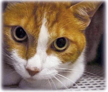 f:id:animal_protections:20161011232715j:image