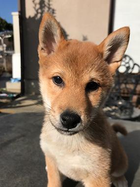 f:id:animal_protections:20170119234258j:image