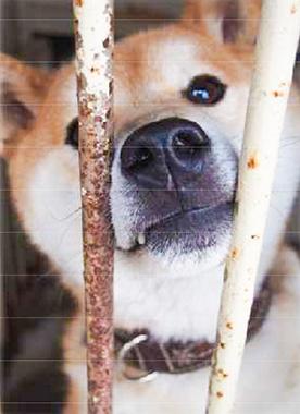 f:id:animal_protections:20170426154652j:image