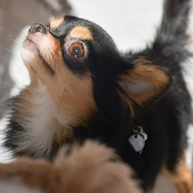 f:id:animal_protections:20180105185152j:image