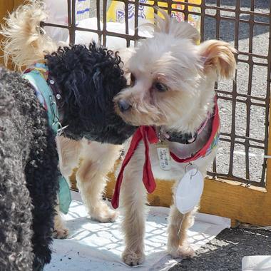 f:id:animal_protections:20180324085637j:image