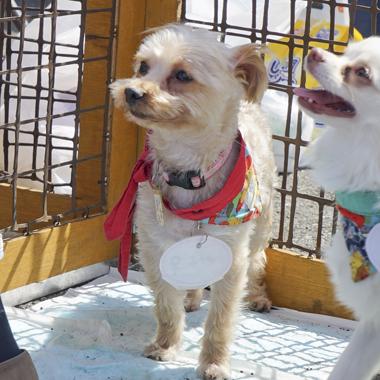 f:id:animal_protections:20180324085646j:image
