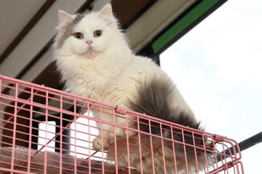 f:id:animal_protections:20200104153835j:plain