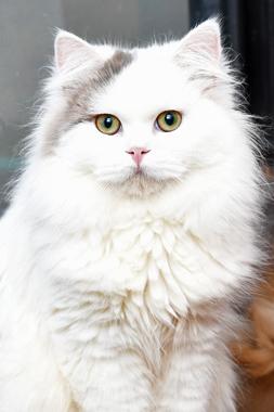 f:id:animal_protections:20200104155023j:plain