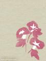 [イラスト][携帯待受][アサガオ]「夏のイラスト(朝顔)」携帯待受240x320