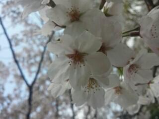 f:id:ankolomochi:20170429111326j:image