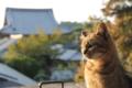 京都新聞写真コンテスト はんなり猫