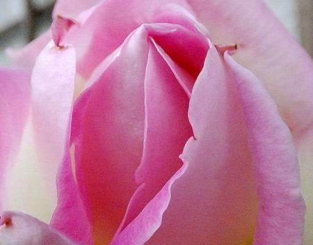f:id:annhobby:20121209214300j:image