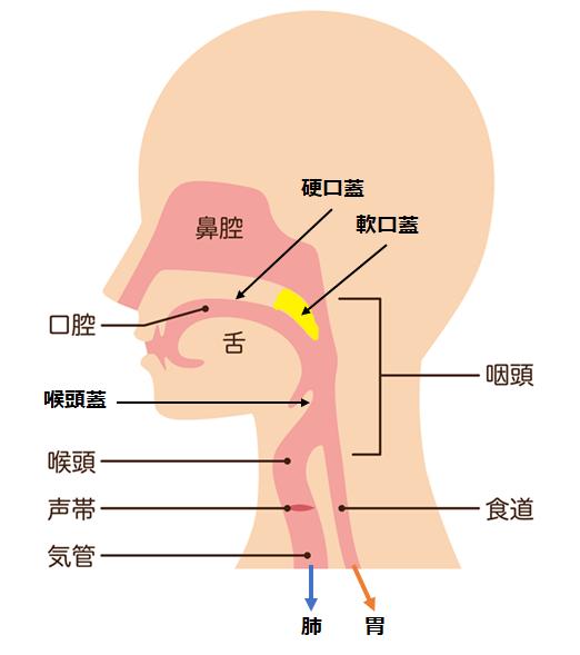 口腔の部位についての説明