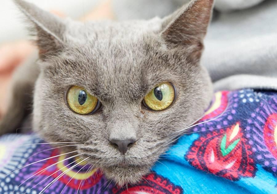 ミグノン最高齢猫シャもちゃん