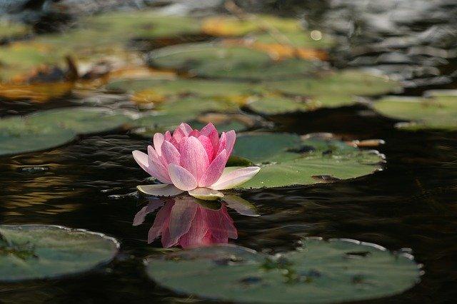4.マインドフルネス瞑想の効果とメリットまとめ