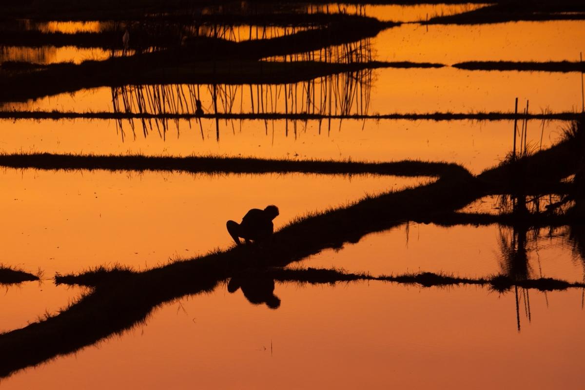 玄米は汚染されている