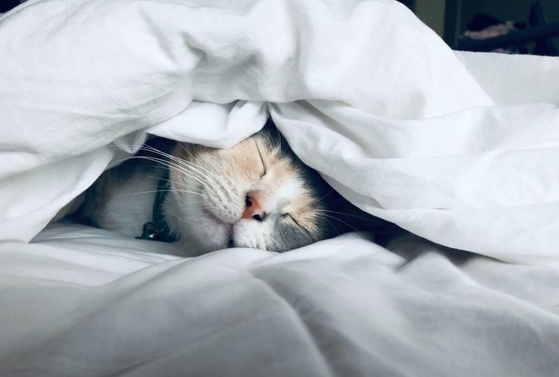 昼寝系の記事