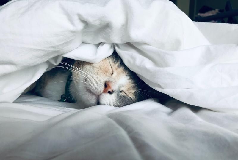 睡眠不足のハエを分析