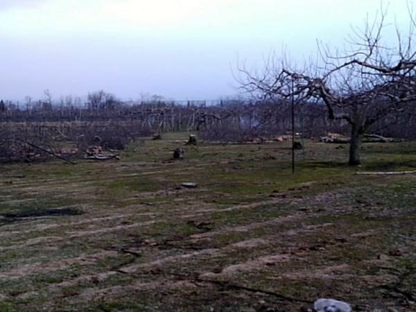 更地になったリンゴ畑