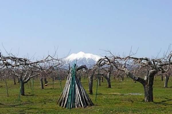 2020年4月17日の岩木山の写真
