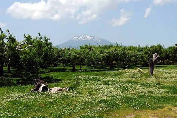 2020年6月6日の岩木山の写真