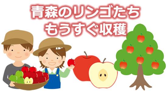 「もうすぐ収穫 青森のリンゴたち」のタイトル画像