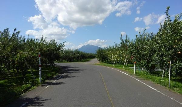 岩木山とリンゴ園の写真01