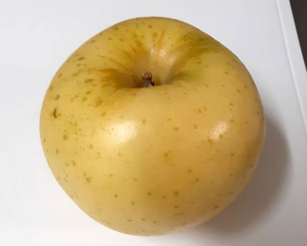リンゴ「トキ」の写真