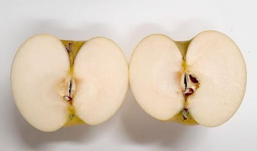 カットしたリンゴ「トキ」の写真