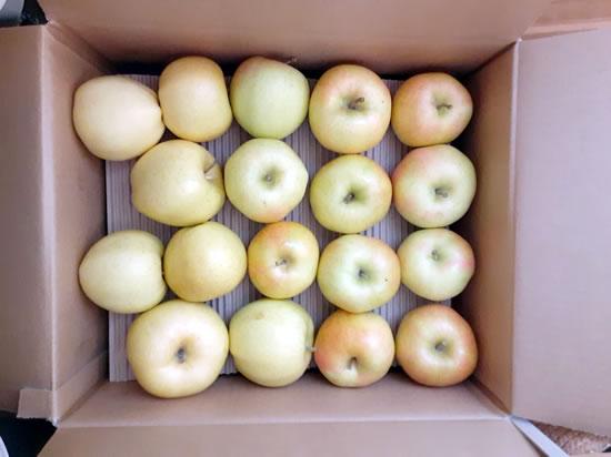 宅配便で届いた訳ありリンゴの「トキ」の写真