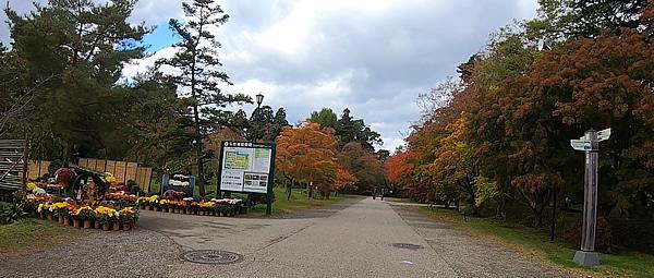 弘前公園の東門を入って植物園入口の紅葉写真
