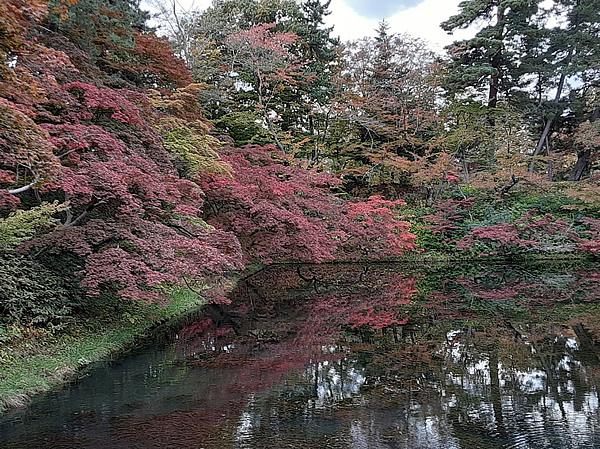 弘前公園の内濠の紅葉の写真
