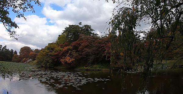 弘前公園の蓮池の紅葉の写真