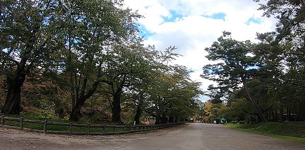 弘前公園の市民広場横の桜の木々もまだ葉が緑ですという写真